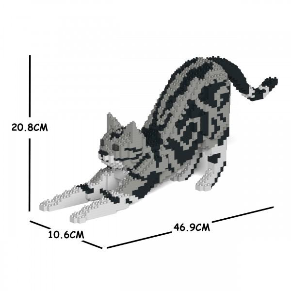 jekca : jekca amerikaanse korthaar kat rekt zich uit